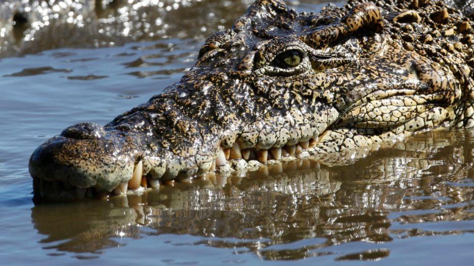 Un crocodile a tué un pasteur lors de baptêmes d'eau dans un lac du sud de l'Ethiopie dimanche.