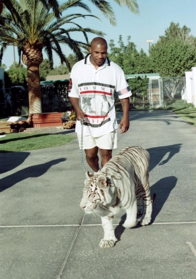 Mike dépense $140,000 pour acheter deux tigres blancs. Sans compter $125,000 par année pour payer leur dresseur (trainer)