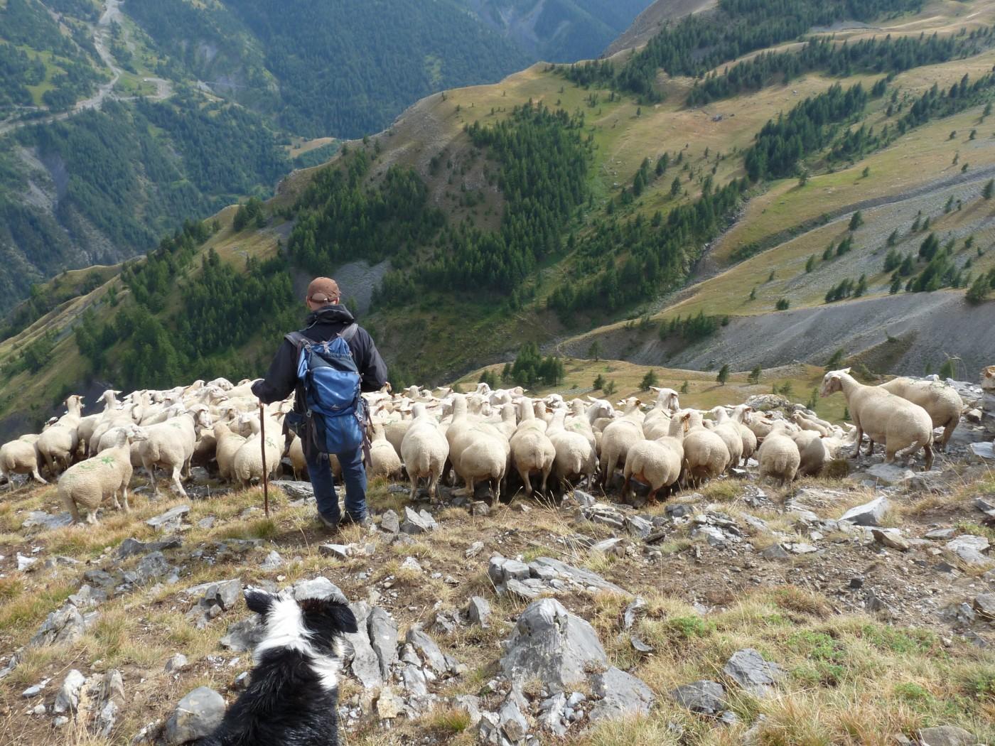 Connais bien chacune de tes brebis, donne tes soins à tes troupeaux