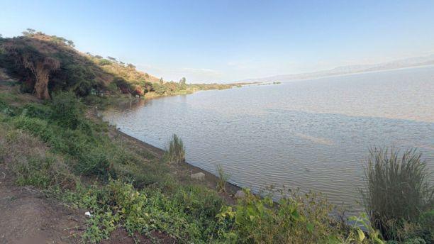 Le lac Abaya est situé dans le sud de l'Éthiopie et aurait une grande population de crocodiles. (Google Maps)